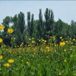 Fürther Türme an Blumenwiese